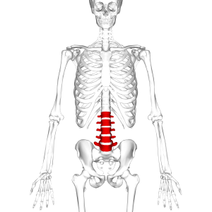Learn about lumbar / spinal stenosis here.